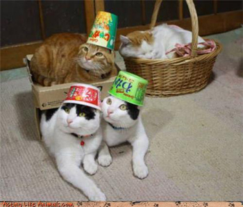 Cats in hats.